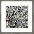 Winter's Mud Framed Print