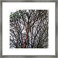 Winters Trees  Framed Print