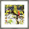 Wishing Tree At The Tomb Of Emperor Framed Print