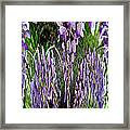 Wisteria Abstract Framed Print