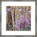 Wisteria And Old Fence Framed Print