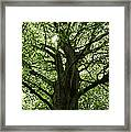Witness Tree Framed Print