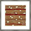 Wood Cross Section Framed Print