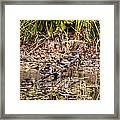 Wood Ducks Framed Print