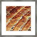 #woodgrain Framed Print
