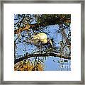 Wood Stork Perch Framed Print