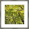 Woodland Background 02 Framed Print