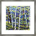 Woodland Birches Framed Print