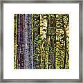 Woodland Morning Framed Print