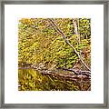 Woodland Stream Early Autumn Montgomery County Pennsylvania Framed Print
