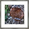 Woodscape 2009 Framed Print