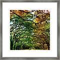 Wormsloe Plantation Framed Print