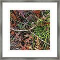 Y-comp 2009 Framed Print