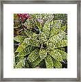 Yellow And Green Bromeliad Framed Print
