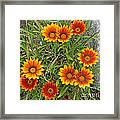 Yellow And Red Daisy Flower Framed Print