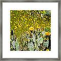 Yellow Blooms Framed Print