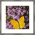 Yellow Butterfly On Pink Flowers Framed Print