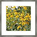 Yellow Cone Flowers Framed Print