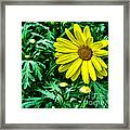 Yellow Flower Of Spring Framed Print