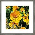 Yellow Flowers Cape Cod Framed Print