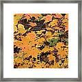 Yellow Foliage Framed Print