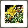 Yellow Flower In The Sun Framed Print
