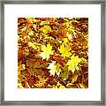 Yellow Leaves Framed Print