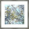 Yellow Leaves Vintage Framed Print
