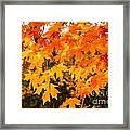 Yellow Orange Fall Tree Framed Print
