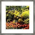 Yellow Orange - Springtime Framed Print