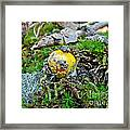 Yellow Patches Baby Mushroom - Amanita Muscaria Framed Print