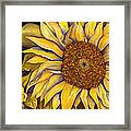 Yellow Sunflower Framed Print by Diane Ferron