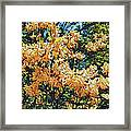 Yellow Too Framed Print