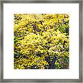 Yellow Tree Framed Print