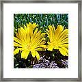 Yellow Twins Framed Print