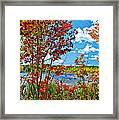 Young And Brash Framed Print
