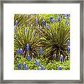 Yucca With Bonnets Framed Print