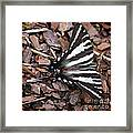 Zebra Swallowtail Butterfly Square Framed Print