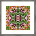 Zinging Zinnia Kaleidoscope Framed Print