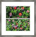Zinnias 4 Panel Vertical Composite Framed Print