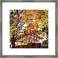 Autumn High Framed Print