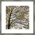 Branch Of Tree In Autumn Framed Print