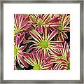 015 Pink And Yellow Flowers Framed Print