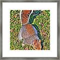 08 Grey Squirrel Sciurus Carolinensis Series Framed Print
