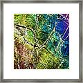 Amphibole Mineral, Light Micrograph Framed Print