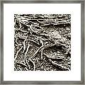 An Old Tree's Roots Framed Print