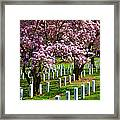 Arlington Cherry Trees Framed Print