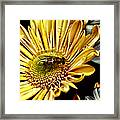 Bee Framed Print by Kelly Rader