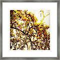 Branch Of Heaven Framed Print