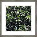 Breadfruit Framed Print